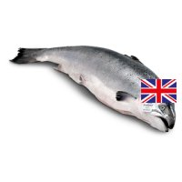 Waitrose whole Scottish salmon 4kg