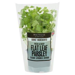 Cooks' Ingredients Flat Leaf Parsley Pot