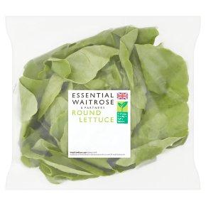 essential Waitrose round lettuce