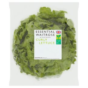 essential Waitrose curly lettuce