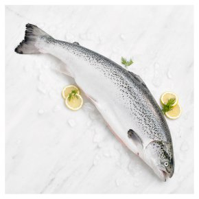 Medium Fresh Whole Scottish Salmon