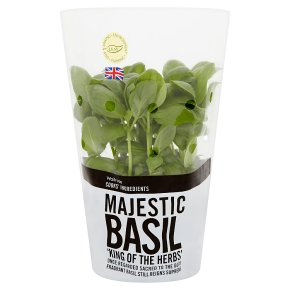 Cooks' Ingredients Basil Potted Medium