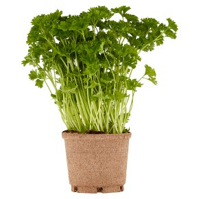 Cooks' Ingredients Potted Curly Parsley